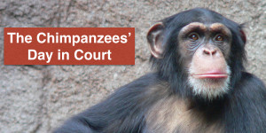 The Chimpanzees' Day in Court.001 (1)