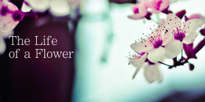The Life of a Flower.001